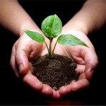 Как подготовить почву к посадке виноградника