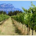 Как правильно выбрать участок для винограда