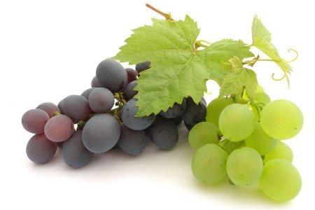 Посадка винограда фото