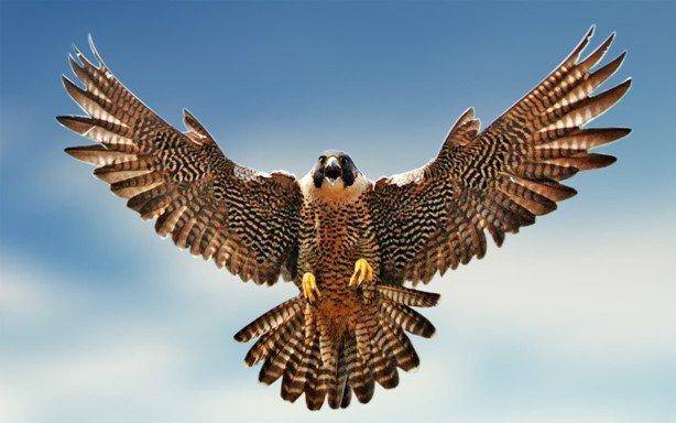 Звуковые отпугиватели птиц